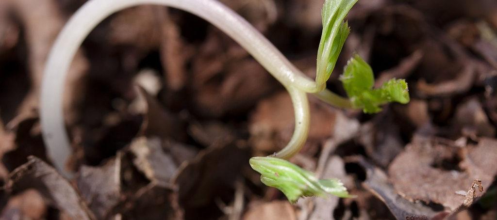 Forstliches Saatgut
